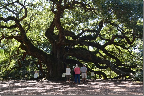 CUTLINE: Community groups are rushing to raise funds by March 14 to buy the remaining 18.7 acres near the Angel Oak tree, which would prevent development and preserve the land. (Photo/Liz Segrist)
