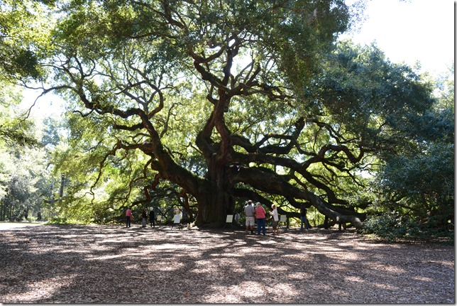 The Lowcountry Open Land Trust plans to work with local residents and municipalities on plans for the land near the Angel Oak on Johns Island. (Photo/Liz Segrist)